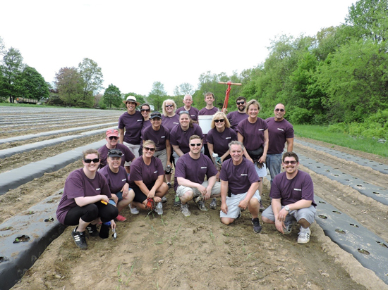 UniBank volunteers at Community Harvest Project in Grafton